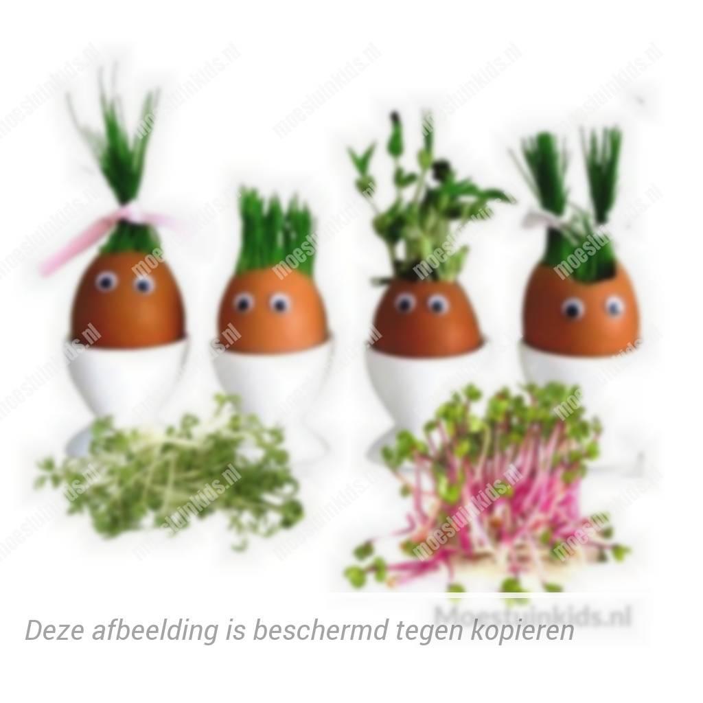 Zelf kiemgroenten kweken