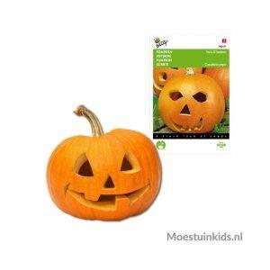 Halloween pompoen Jack 'O Lantern - Buzzy