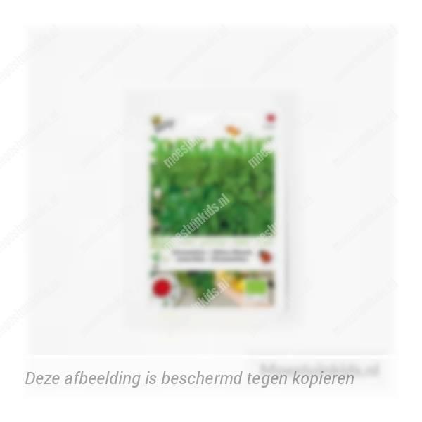 Citroenmelisse zaden - Buzzy Organic
