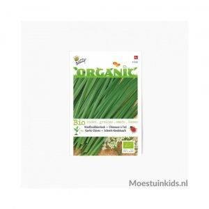 Knoflookbieslook zaden - Buzzy Organic